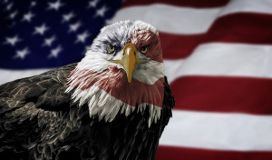 Oil painting of a majestic Bald Eagle with the USA flag across it's face against a photo of a blurry American Flag.